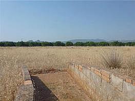 Grundstück in verkauf in Las Marinas - Les Marines  in Dénia - 203329625