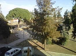 Foto - Piso en alquiler en Montequinto en Dos Hermanas - 241023450