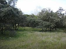 Terrenos Rozas de Madrid (Las), Los Peñascales