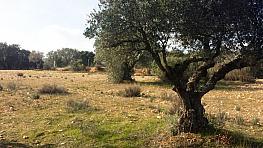 Terreny en venda calle Poligono, Villa del Prado - 357246522