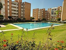 Piscina - Piso en alquiler en calle Las Palmeras,  Parque de la Paloma  en Benalmádena - 332703192