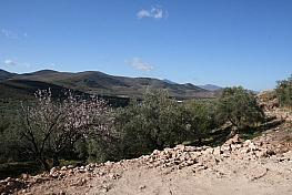 Land for sale in carretera Alcolea a Cherín, Alcolea - 341559576