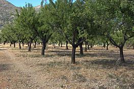 Terreno en venta en Jalón/Xaló - 323464562