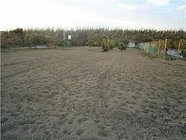 Terreny en venda carretera Vélez a Trapiche, Vélez-Málaga - 326259134