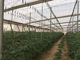 Terreny en venda Níjar - 368607111