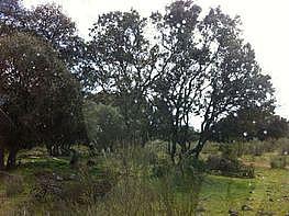 Grundstück in verkauf in calle Finca El Conjuro, Colmenar del Arroyo - 347124709