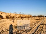Entorno - Finca rústica en alquiler en polígono Norte, Torrellano en Elche/Elx - 122296097