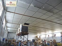 Foto - Nave industrial en alquiler en carretera Crevillente, Crevillent - 295099347