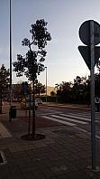Oficina en alquiler en Teatinos en Málaga - 399935239