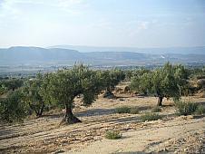 Terrenos Villena