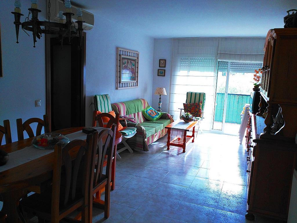 Comedor - Piso en alquiler de temporada en pasaje Merçe Rodoreda, Calella - 285270188