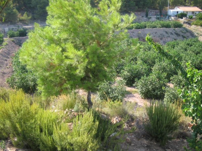 Casa rural en alquiler en Alhama de Murcia - 50521626