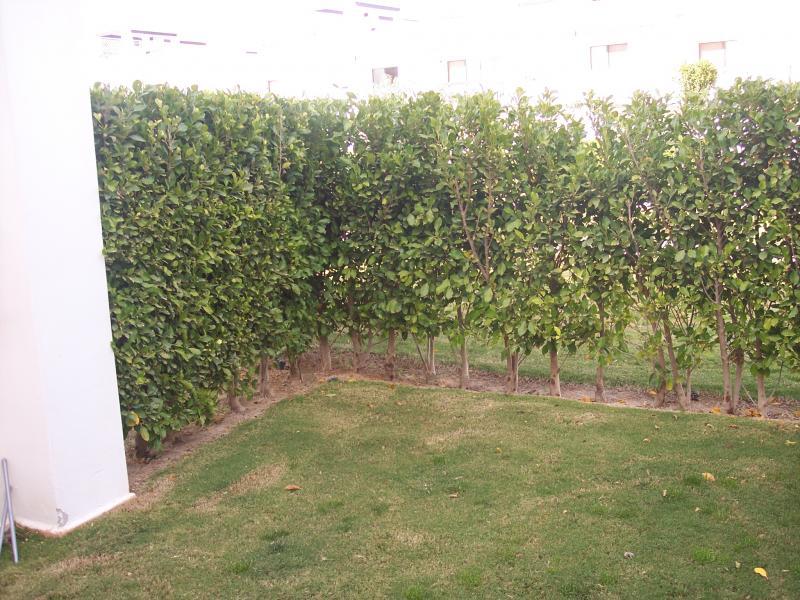 Piso en alquiler en Alhama de Murcia - 116687183