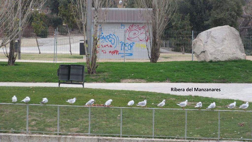 Oficina en alquiler en calle Tomasa Ruiz, Comillas en Madrid - 347528007