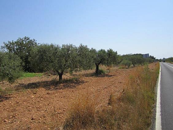 Terreno en alquiler en carretera De la Riera, Torredembarra - 204204486