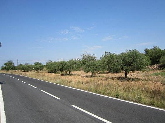 Terreno en alquiler en carretera De la Riera, Torredembarra - 204204489