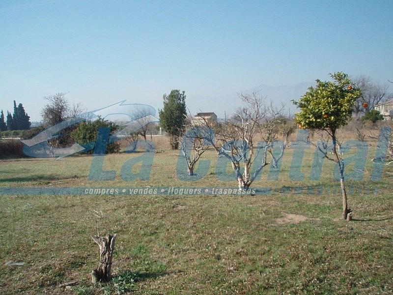 P2070022 - Finca rústica en alquiler en Tortosa - 275170531