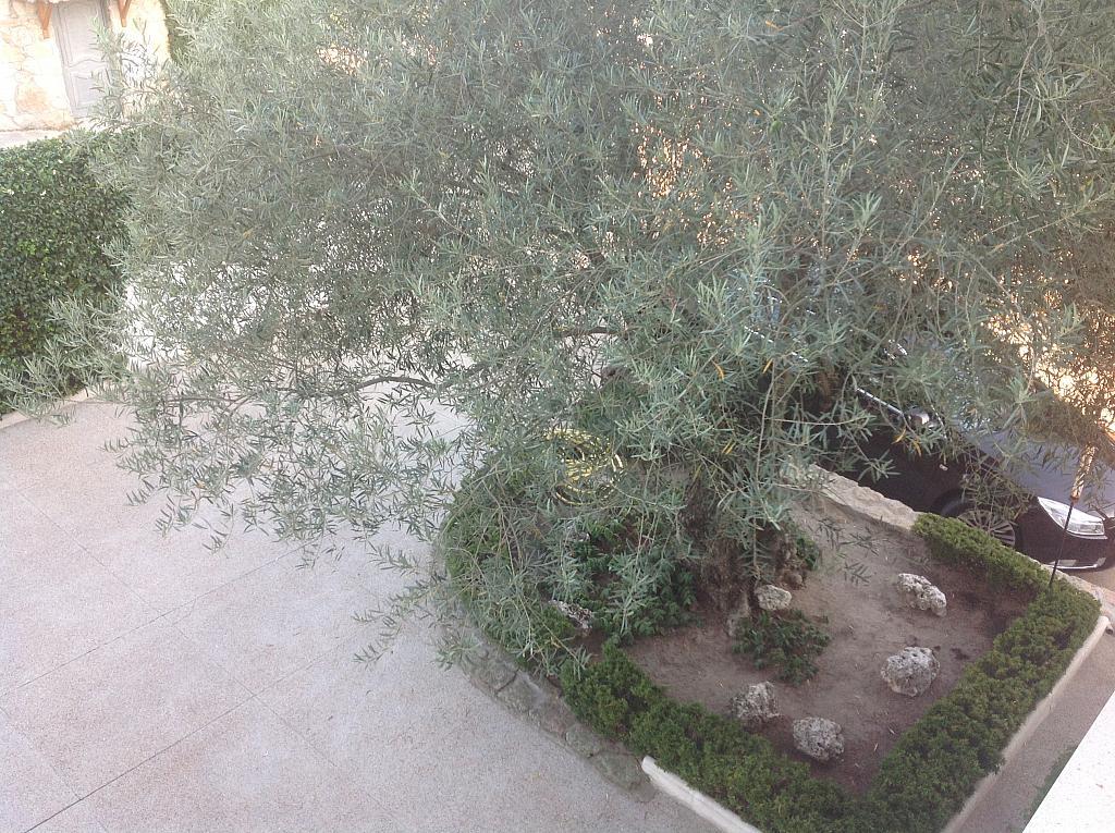 Jardín - Chalet en alquiler en calle Real, Alpedrete - 266263084