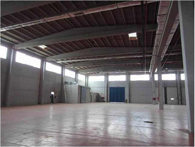 Nave industrial en alquiler en calle El Raiguer, Montornès del Vallès - 139869406