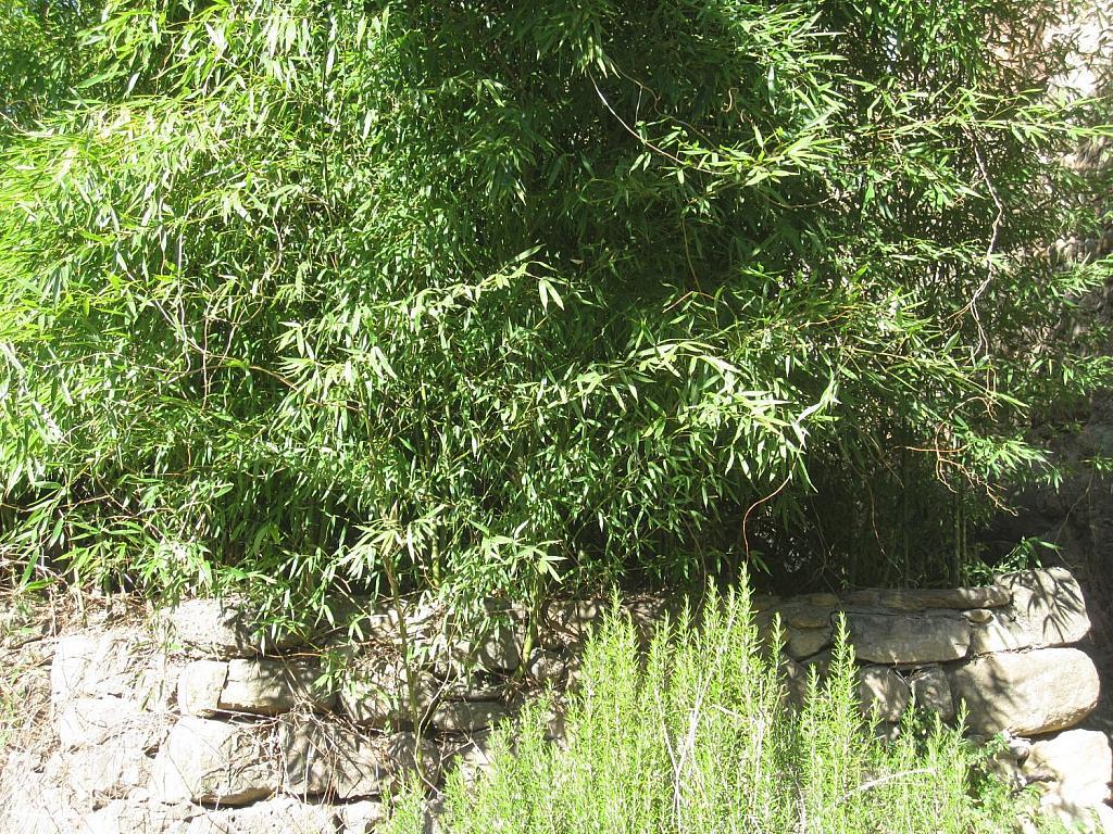 Casa rural en alquiler en Vall de Bianya, la - 332654386