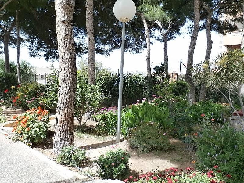 Foto - Apartamento en venta en Poniente en Benidorm - 280571151