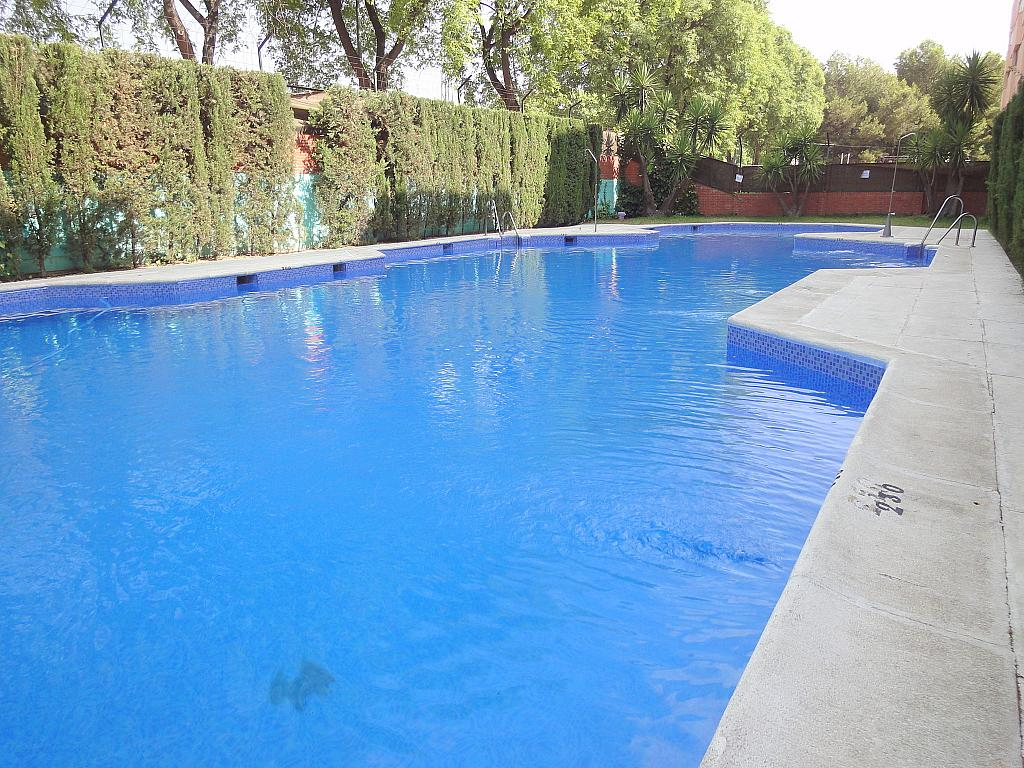 Piscina - Estudio en alquiler en calle Alcalde Luis Uruñuela, Este - Alcosa - Torreblanca en Sevilla - 185097858