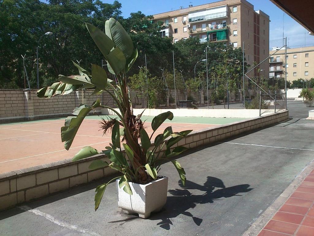 Foto - Piso en alquiler en calle Bami Pineda, Bami en Sevilla - 304410776
