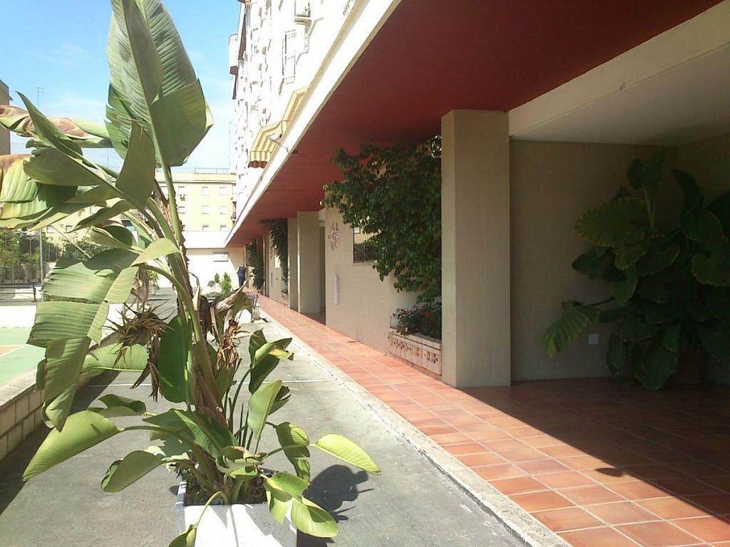 Foto - Piso en alquiler en calle Bami Pineda, Bami en Sevilla - 304410785