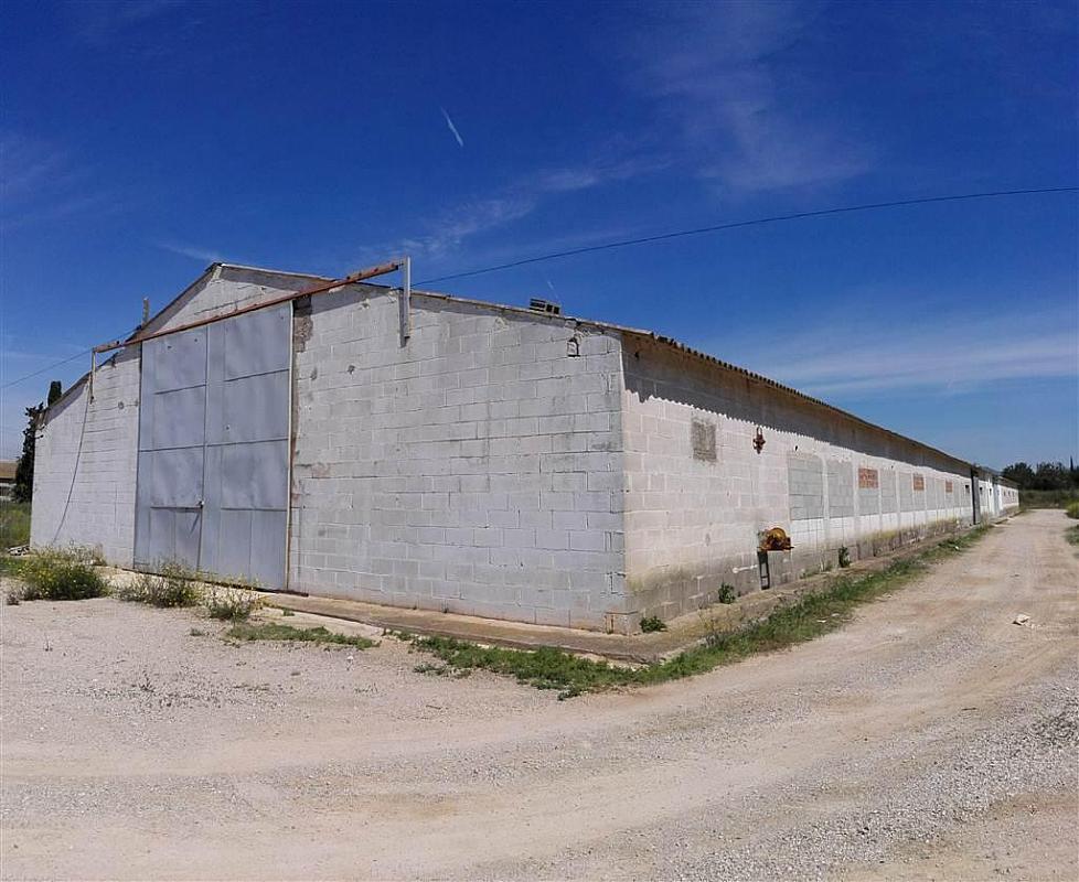 Imagen del inmueble - Nave industrial en alquiler en calle De Puigpelat, Valls - 272761405