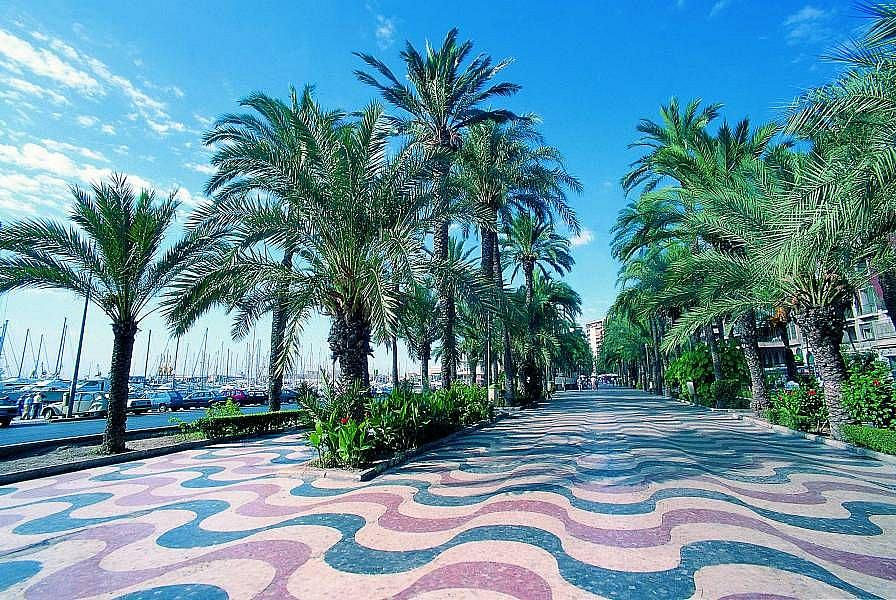 Foto - Local comercial en alquiler en calle Pintor Baeza, Altozano - Conde Lumiares en Alicante/Alacant - 332497900