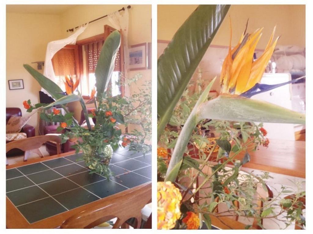 Casa rural en alquiler en calle Lomo Guillén, Santa María de Guía - 302283220
