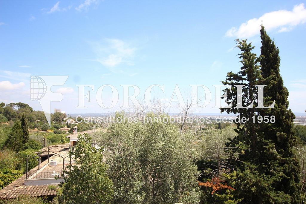 IMG_6873 - Masía en alquiler en calle Hospitalet, Son Anglada en Palma de Mallorca - 325983315