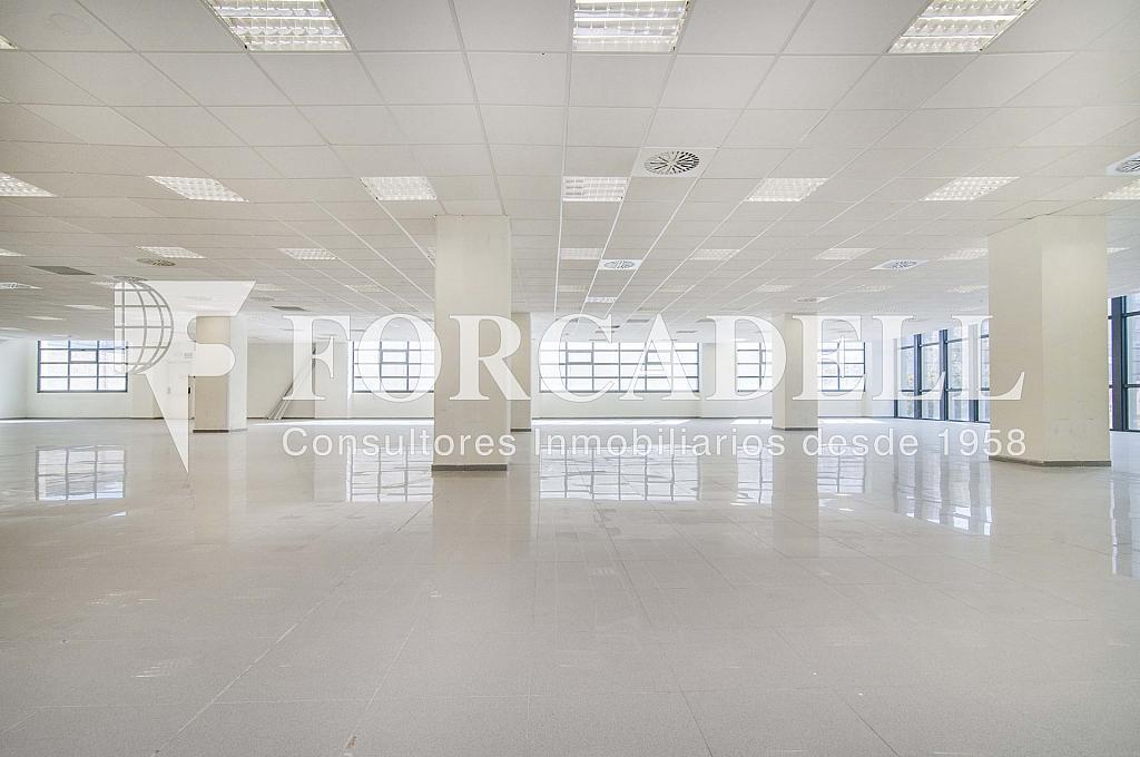 _DSC3614_retoc - Oficina en alquiler en calle Veneçuela, Sant martí en Barcelona - 299867609