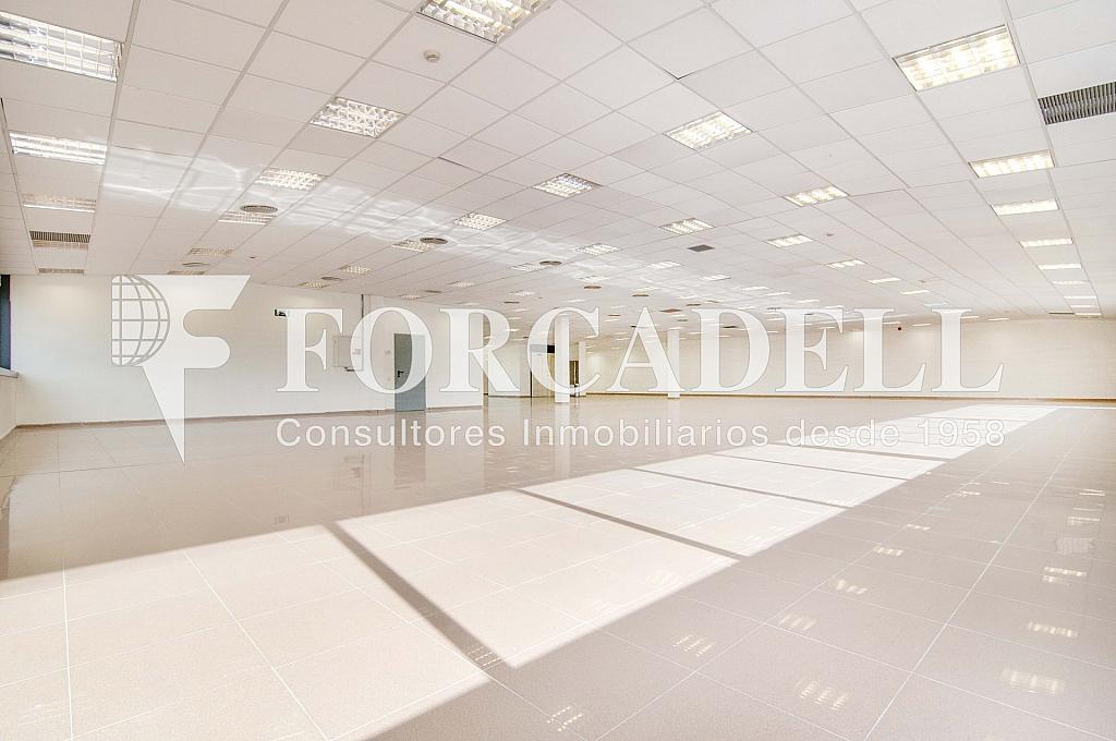 _DSC3517_retoc - Oficina en alquiler en calle Veneçuela, Sant martí en Barcelona - 299867612