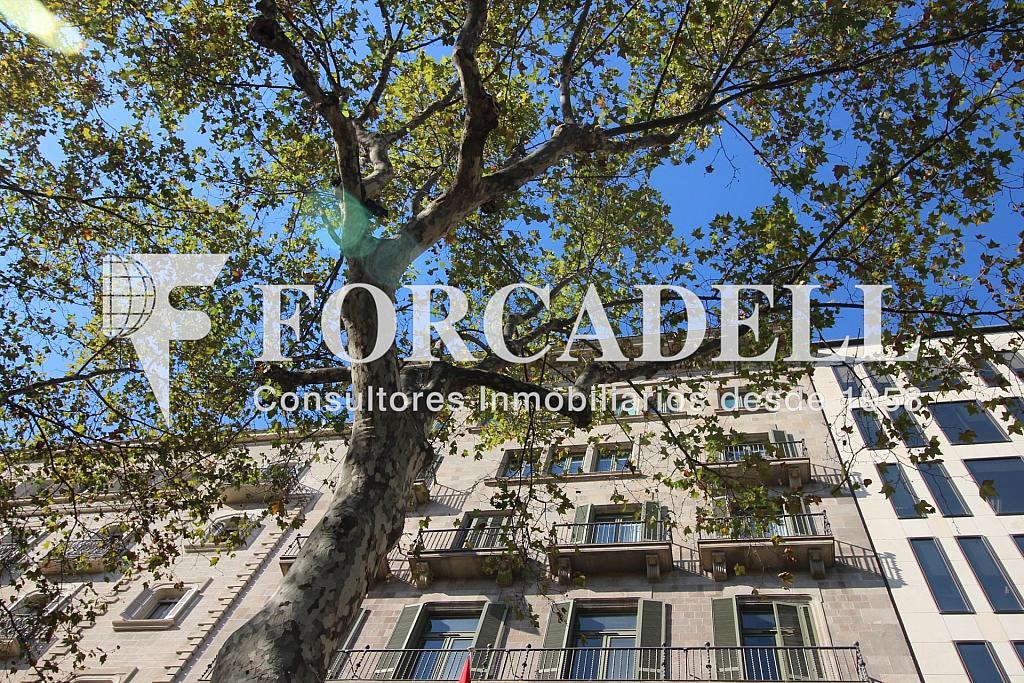 IMG_5595 - Oficina en alquiler en calle De Gràcia, Eixample dreta en Barcelona - 316892349