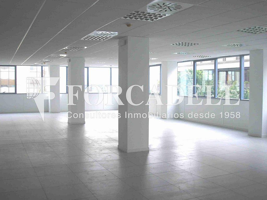 P1010003 - Oficina en alquiler en calle Frederic Mompou Illa, Sant Just Desvern - 263441508