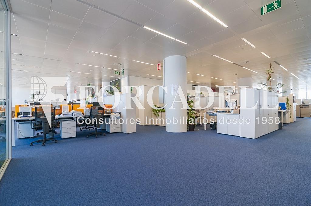 _DSC5700 - Oficina en alquiler en calle Europa, Bellvitge en Hospitalet de Llobregat, L´ - 263442324