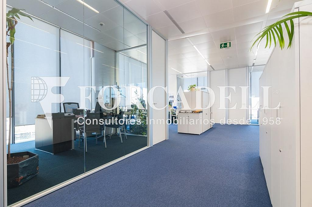 _DSC5698 - Oficina en alquiler en calle Europa, Bellvitge en Hospitalet de Llobregat, L´ - 263442327