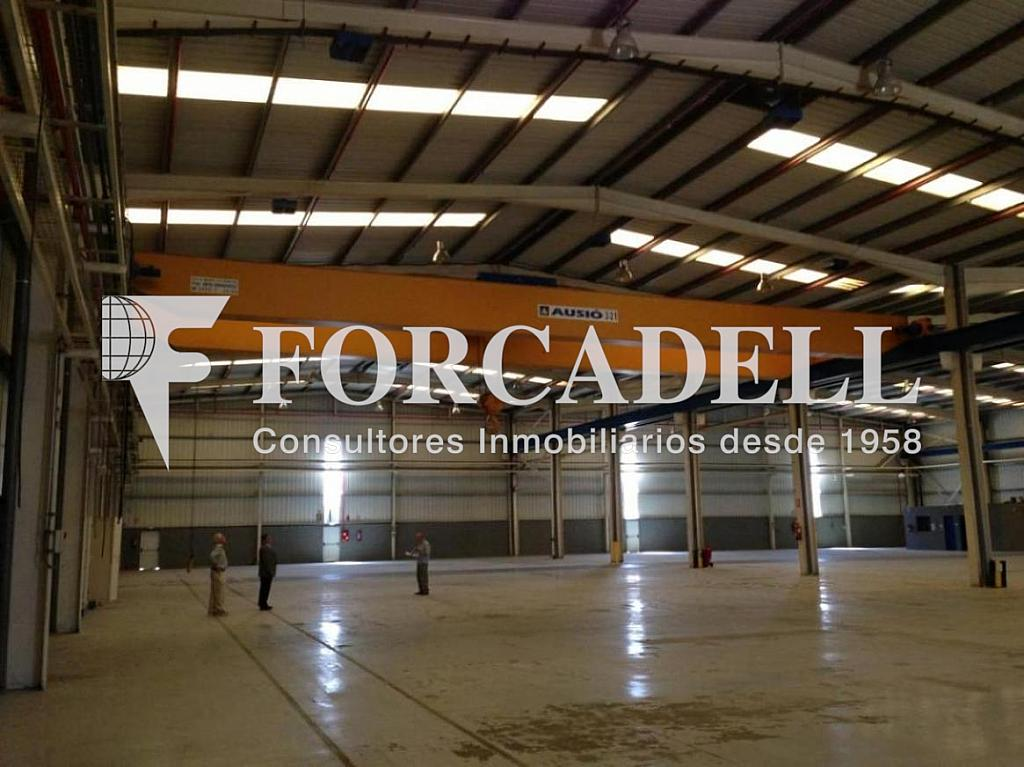 IMG_3487 - Nave en alquiler en calle De la Forja, Arboç, l´ - 266473221