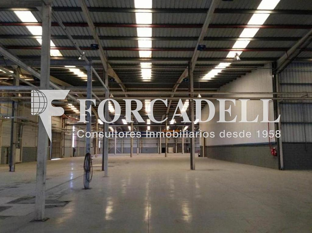 IMG_3482 - Nave en alquiler en calle De la Forja, Arboç, l´ - 266473227