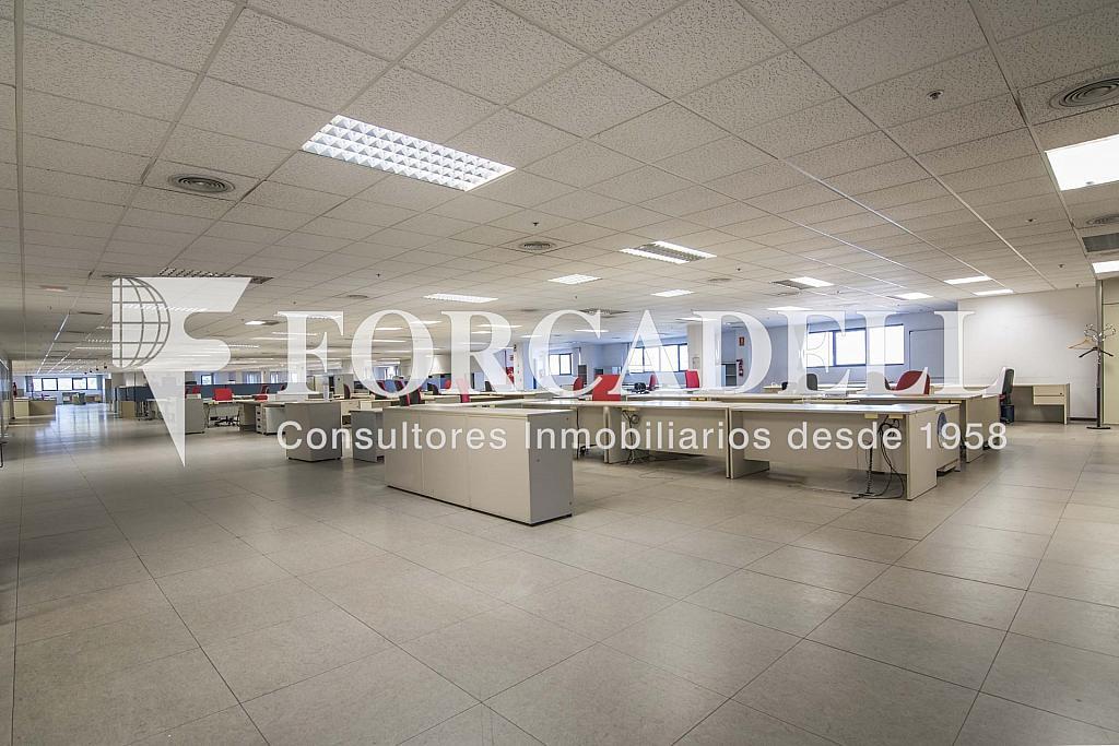 DSC_3763 - Nave industrial en alquiler en calle Maresme, Cornellà de Llobregat - 360576225