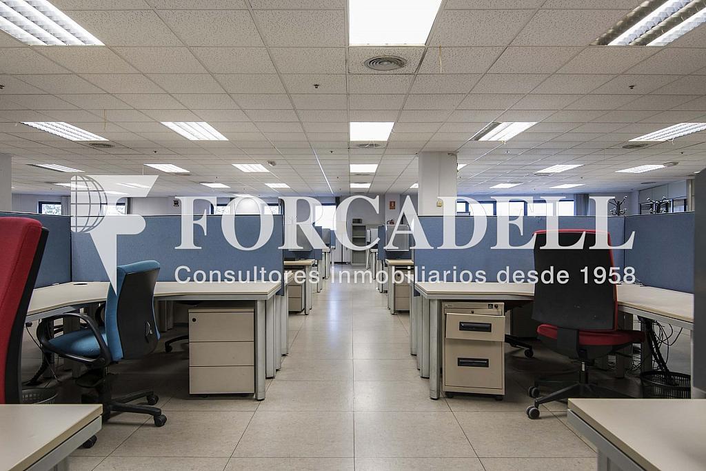 DSC_3745 - Nave industrial en alquiler en calle Maresme, Cornellà de Llobregat - 360576237