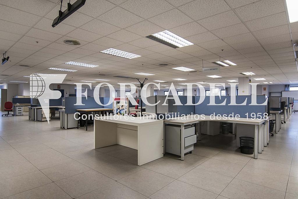 DSC_3743 - Nave industrial en alquiler en calle Maresme, Cornellà de Llobregat - 360576240