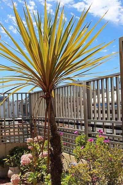 Foto - Piso en alquiler en plaza De Lugo, Ensanche en Coruña (A) - 377692318