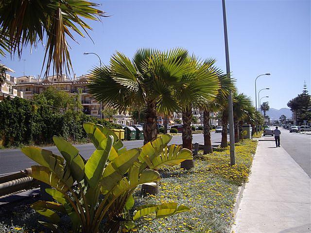 Piso en alquiler en calle El Peñoncillo, Morche, El - 161723855
