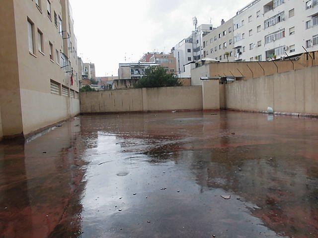 Patio - Local comercial en alquiler en calle , Cas Capiscol en Palma de Mallorca - 329588486