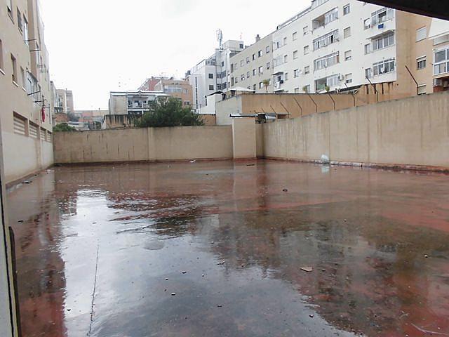 Patio - Local comercial en alquiler en calle , Cas Capiscol en Palma de Mallorca - 329588489