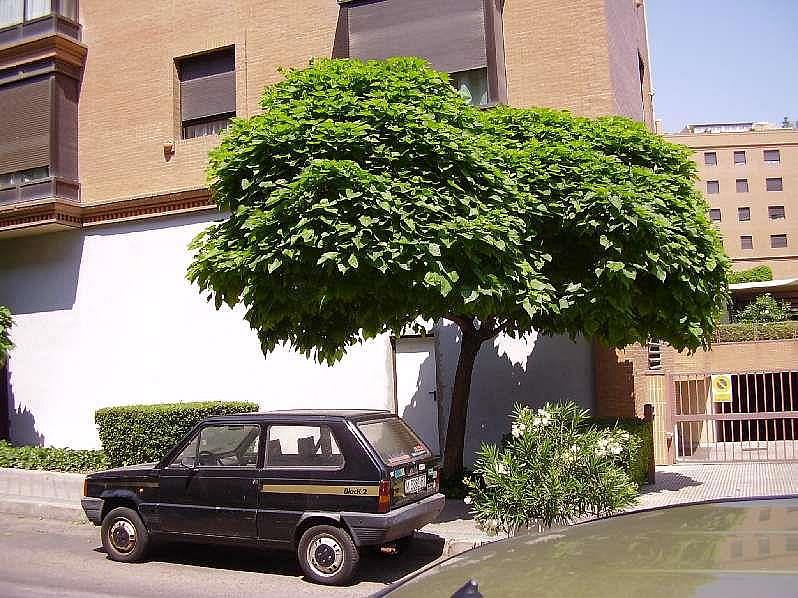 Foto4 - Local comercial en alquiler en Hortaleza en Madrid - 323736812