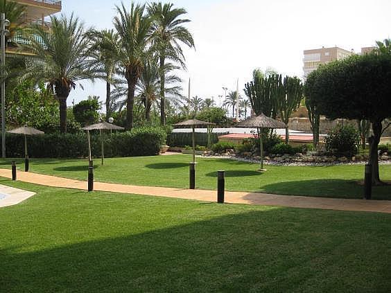 Piso en alquiler en Playa de San Juan en Alicante/Alacant - 312510756
