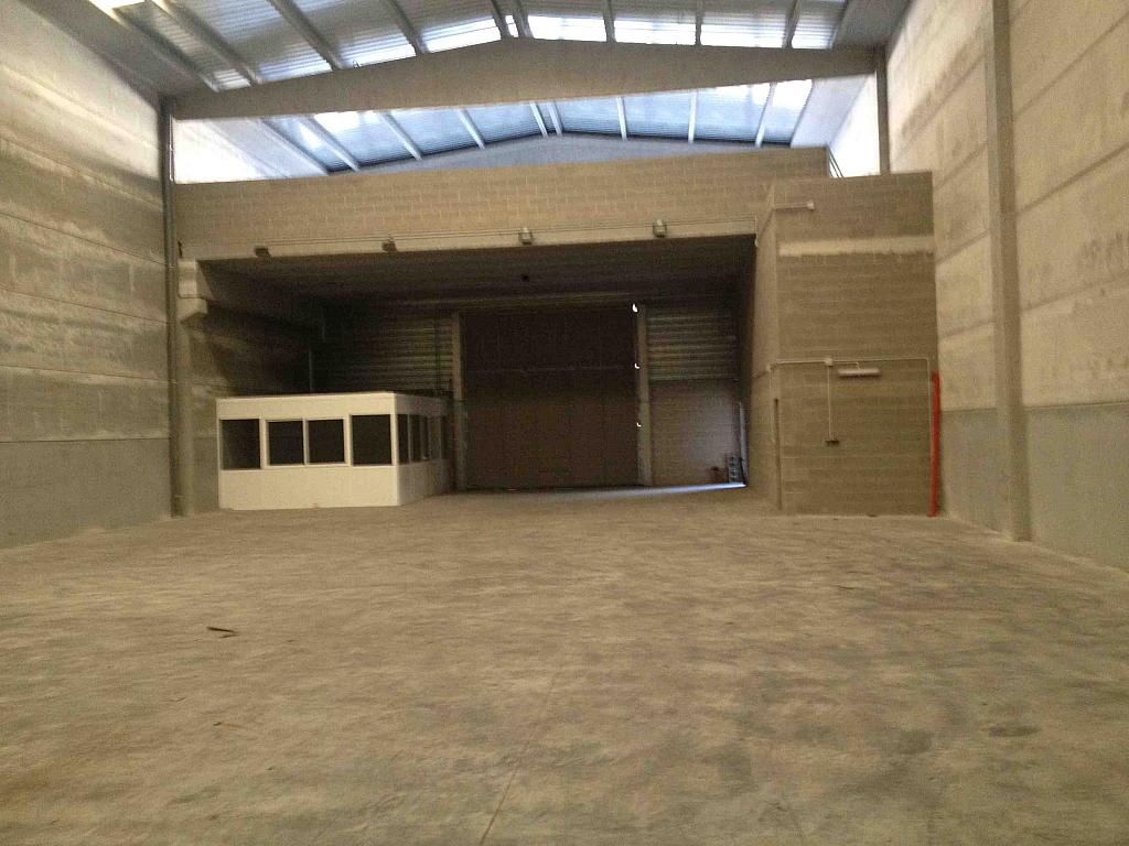 Planta baja - Nave industrial en alquiler en calle Moli Guineu, Can Catessus en Sant Sadurní d´Anoia - 244026169
